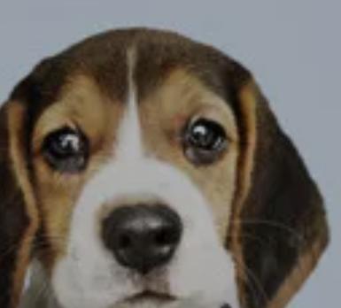 petstop.co.il מגזין בעלי חיים